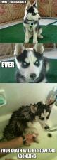 and taking baths: Animals, Dogs, Bath, Husky, Funny Stuff, Funnies, Humor