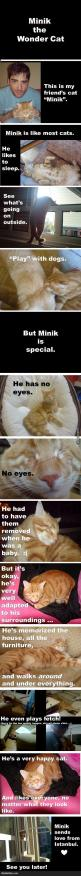 :C aww..: Cats, Sweet, Pet, Wondercat, Wonder Cat, Kitty, Animal, Eye, Cat Lady