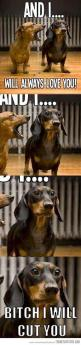 Dying hahahaha!!!: Dachshund, Doxie, My Girlfriend