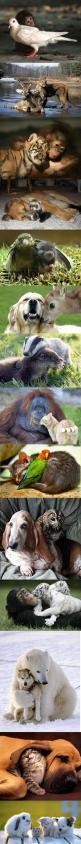 Friendship and communication across hard lines.: True Friendship, Sweet, Best Friends, Unexpected Friendship, Odd Animal Couple, Unlikely Animal Friend, Odd Couple, Animal Friendships, Odd Animal Friend