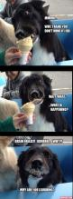Fun Claw - Funny Cats, Funny Dogs, Funny Animals: Funny Pictures Of Dogs - 20 Pics: Animals, Brain Freeze, Border Collie, Dogs, Ice Cream, Funny Animal, Icecream