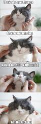 Funny: Funny Animals, Cats, Funny Pictures, Funny Cat, So True, Funny Stuff, Funnies, Cat Lady