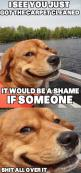 Funny Pictures Of Animals | Fun Claw: Funny Pictures Of Dogs - 20 Pics: Animals, Dogs, Funny Stuff, Funnies, Funny Animal, Smile, Devious Dog