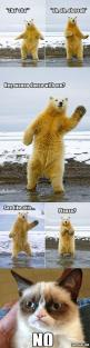 #GrumpyCat #meme For more Grumpy Cat stuff, gifts, and meme visit www.pinterest.com/erikakaisersot: Polar Bears, Wanna Dance, Funny Dance Memes, Funny Animal, Even Grumpycat, Cat Stuff, Meme Visit, Grumpy Cat, Cat Memes
