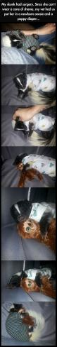 HE'S ADORABLE: Awwwwwww It S, Funny Pics, Adorable Animals, Skunk Pet, Stuffed Sloth, Pet Skunk
