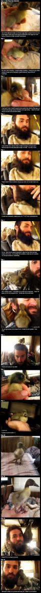 How This Man's Epic Beard Saved A Duckling's Life... this is so sweet :): This Man, Ducklings, Beard Saved, Sweet, Epic Beard, Man S Epic, Duckling S Life, Animal
