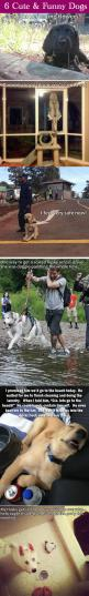 I love dogs.: Funny Pets, Funny Animals, Funny Husky, Awwwwwwww 3, Husky Funny, D Awwww, Cute Dogs, Cute And Funny Dogs