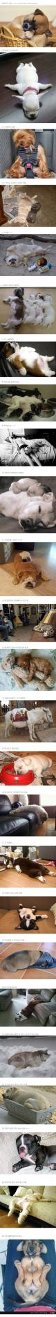 sleepy puppies :D: Sleeping Dogs, Dogs Lie, Sleepy Puppies, Sleeping Pups, Sleepy Pups, Puppy, So Funny, Sleeping Puppies, Animal