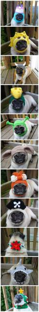 These are funny and cute at the same time.  I need Lindsay to crochet some for my dog.: Poor Pug, Crochet Hat For Women, Dogs In Hats, Pug Hats, Pugs, Puppy, Crochet For Dogs, Crochet Dog Hats, Crochet Dog Face