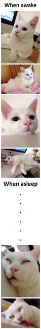 This is how a cat sleeps: Cats Cats, Kitty Cats, Beautiful Cats, Funny Cat, Crazy Cat, Cat Sleeping, Gorgeous Cat, Cat Lady
