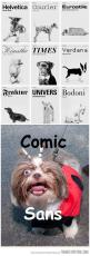 XD: Animals, Dogs, Funny Pictures, Comic Sans, Funny Stuff, Fonts, Typography, Design
