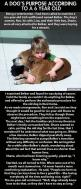"""Dogs have so much to teach us."" I don't care if this story is real or not. I was crying by the end of it because its meaning is so true.: Animals, Dogs, Dog S Purpose, Sweet, Quotes, Pet, So True, Kid"