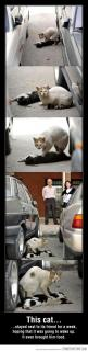 Aw: Cats, True Friendship, Animals, Heart, Sweet, Animal Abuse, So Sad