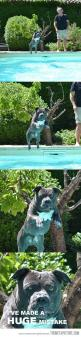 awww: Dogs, Stuff, Pool, Pitbull, Huge Mistake, Funnies, Funny Animal
