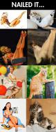 Cats: Funny Animals, Cats Nailed, Nailed It, Girls Too Funny, Funny Cats, Cant, Pinup Cats, Funny Stuff, Pin Up Girls