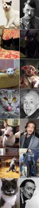 Cats That Look Like Einstein: Cute Funny Animal, Meme Animal, Same Animal, Cute Cat, Kitten Meme, Funny Cat Quote, Even Animates, Funny Cat Meme