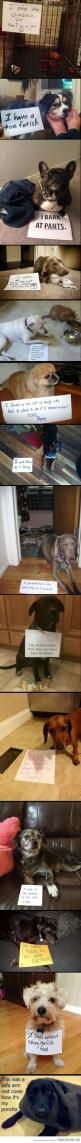 dog shaming at its finest - the last one is my favorite :) I dare you not to laugh!: Doggie, Dog Shame, Giggle, Dog Shaming, Puppy, Animal Shaming, So Funny