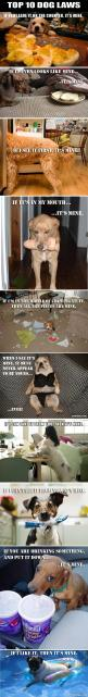 Funny Dog Laws – 10 Pics: Dog Laws, Funny Animals, Weenie Dog, Funny Dogs, Top 10, Dog Rules, Funny Quotes