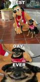 Hahahaha!!!! I'm laughing way to hard at this!!: Doggie, Animals, Funny, Best Day Ever, Funnies, Happy Dogs, Smile, Disney