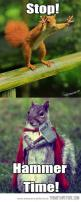 i only repinned this because it is a squirrel dressed up. i'm laughing so hard.: Funny Squirrel, Thor Squirrel, Animals, Squirrels, Funny Pictures, Hammer Time, Funnies
