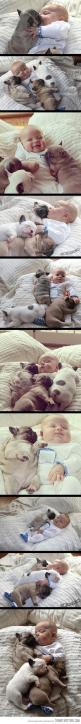 the cuteness: Pug Puppie, Cuteness Overload, French Bulldogs, Puppy, Baby, Frenchie, Animal