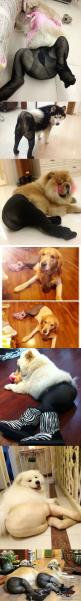 Dogs in pantyhose, this is hilarious!: Giggle, Cant, Thought, Poor Dogs, So Funny, Animal