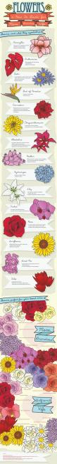 Finally, a chart that shows me the meaning behind the flowers I get for my mom and wife!: Fun Recipes, Gift, Opportunity, Life, Wedding, Gardening, Infographics, Flower