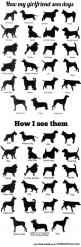 How I See Dogs: Sees Dogs, Stuff, Cowboy Bebop, Funny Pictures, Corgi, So True, Funnies, Animal