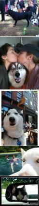 LOL!: Dogs, Dog Photos, Photobombing Husky, Funny, Husky Photobombs, Photo Bombs, Photobombing Dog, Animal, Epic Husky