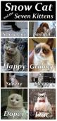 Snow Cat and the Seven Kittens! #funny #animals #grumpycat: Grumpycat, Funny Cat, Snow Cat, Funny Stuff, Crazy Cat, Funny Animal, Kittens, Snowcat, Grumpy Cat