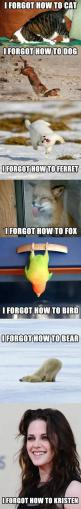 the last one!!! OMG I DIED: Animals, Funny Pictures, Funny Stuff, Funnies, Forgot, Humor, Things