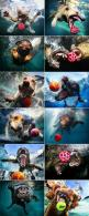A FAMOUS PHOTOGRAPHER (SETH CASTEEL) IN CALIFORNIA DECIDED TO TAKE A FEW OF HIS FURRY FRIENDS, A BALL AND A HIGHT RESOLOUTION UNDERWATER CAMERA,   !!!HERE ARE THE RESULTS ENJOY!!!: Animals, Pet, Underwater Dogs, Funny Photos, Funnies, Seth Casteel, Dogs U