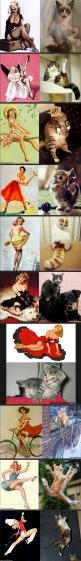 I think the cats got it!: Giggle, Funny Cat, Pin Up Cats, Pinup Cats, Funnies, Humor, Cat Lady, Animal
