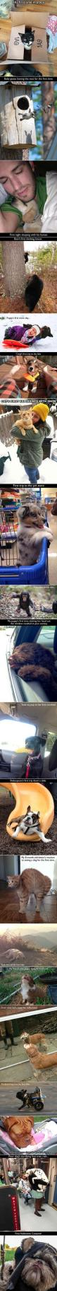These animals were photographed trying things for the first time and their reactions are priceless.: Funny Animals, Cat, First Time, Animal Funnies, Cute Animals, Animals And Pets Funny, Baby Book, Dog, Firsttime