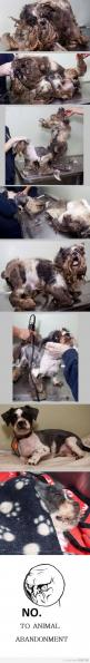 This is this dogs first haircut. You have to double click to get to see it up close. At first I wasn't sure what had happened to this poor little guy.: Doggie ́S, Animal Rights, Animal Cruelty, Guy, Pet, Animal Abuse, Haircut, Animal Abandonment, Poor