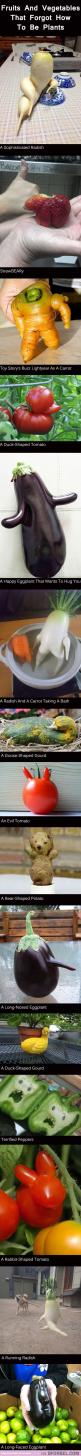 Vegetables that forgot how to vegetable...: Fruit, Forgot They Re, Giggle, They Re Plants, Funny Vegetables, 15 Plants, Funny Quotes, Funny Stuff
