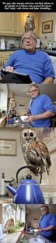 I WANT ONEEE: Disney Movies, D Awwwww, Little Owls, Funny Pictures, Helpful Owl, House Owl, Owl Pet, Pet Owl, Animal