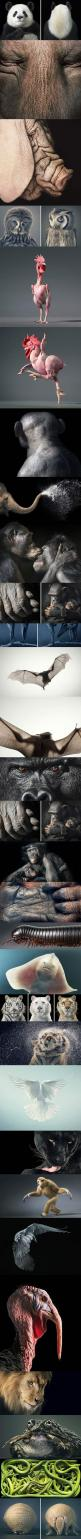 Only a creature could combine beauty, emotions, and power into animals to be captured on film by anyone conscious of this beauty: Animals, Stuff, Creature, Tim Flach, Pictures, Things, Amazing Animal, Animal Portraits, Photography