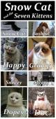 Snow Cat and the Seven Kittens  #GrumpyCat #Memes: Cats, Funny Cat, Snow Cat, Crazy Cat, Funny Stuff, Kittens, Funny Animal, Grumpy Cat, Snowcat