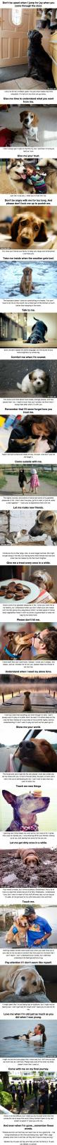The 20 Important Facts Dog Lovers Must Never Forget: Doggie, Dog Owners, Dogs, Best Friends, Pet, So True, Puppy, Dog Lover Quote