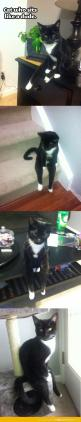 The cat who sits like a human.   ...........click here to find out more     http://googydog.com: Funny Cats, Crazy Cat, Dr. Who, Kitty, Cat Lady, Animal