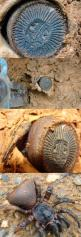 Let Me Take a Closer Look…Oh No WTF  You can't tell me that spiders can evolve to tricking archeologists now!!!! NOOOOOO!!!!!!: Animals, Spiders, Thought, Trapdoor Spider, Weird, Nope Nope Nope, Shit