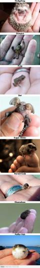 Amazing Little Animals: Babies, Hedgehog, Cute Baby Animals, Animal Babies, Cute Babies, Tiny Animals
