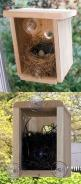 Beautiful Window bird house!!!! I want one. How neat to have with small children. Now I want two!
