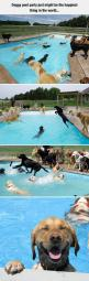 The Happiest Party In The World: Pool Parties, Dogs, Labrador, Dog Pools, Happiest Thing