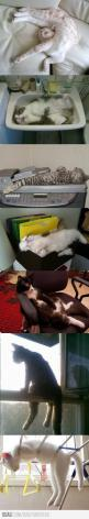 Cats..: Sit, Crazy Cats, Kitty Cats, Fit, Animals, Funny Cats, Cats Sleep, Cat Lady