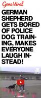 German Shepherd Gets Bored of Police Dog Training, Makes Everyone Laugh Instead!: Germanshepherd, Dog Training, Train Dog, German Shepherd Police Dog, Police Dogs, Gsds, Animal