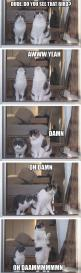 Funny cats: Animals, Giggle, Funny Pictures, Funny Cats, Funny Stuff, Humor, Funnies