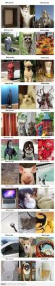 What You See vs. What Animals See: Funny Animals, Cat, Animal Funnies, Funny Pictures, Funny Stuff, Cute Animals, Humor