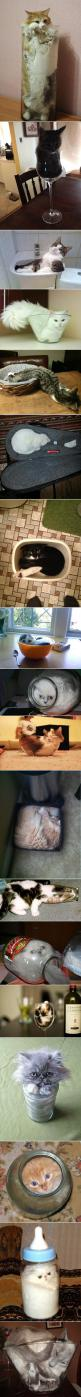 Obviously cats are not claustrophobic.: Kitty Cats, Funny Cats, Container, Proof Cats, Crazy Cat, Liquid Cats, Cat Lady, Animal
